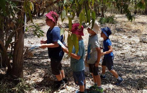 נווטים צעירים במהלך משחק ניווט ביער